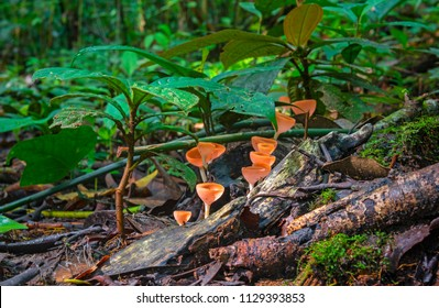 Long exposure photograph of the Amazon Rainforest floor with red neotropical cup fungus (Cookeina sulcipes) inside the Yasuni National Park by the Napo river, Ecuador.
