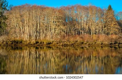 Long Exposure, Preachers Slough, Chehalis River, Montesano, Washington State, USA