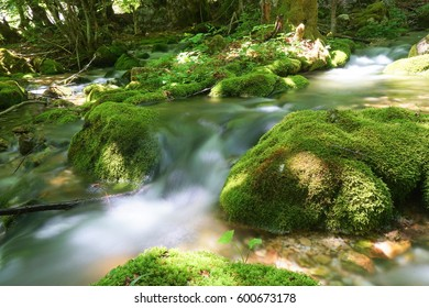 Long exposure shot of the river in Valbona, Tropoja, Albania. Bright green moss and grass in the deep forest