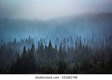 Long exposure of snow falling in a mountainous forest