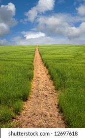 Long golden yellow footpath leads across green fields and up a hill to the distant horizon under a blue cloudy sky