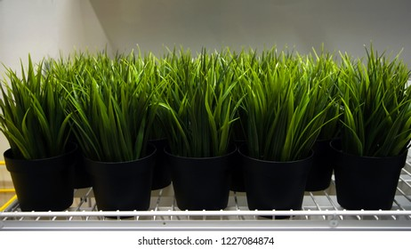 Long grass in black pots
