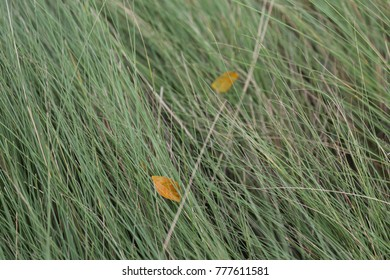 long grass and brown leaf in farm
