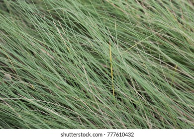 long grass in farm