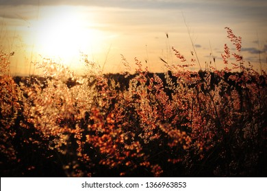 Long Grass Flowers Seeds In the Sunset Dramatic Heavenly Godlike Uplifting Grassy Field Rolling Hills Outdoors Parklands Woods Park Suburbia Wilderness