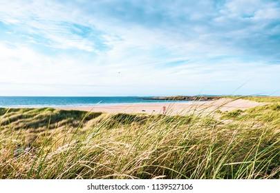 Long grass growing on a sandy beach on a sunny day, taken on Golden Strand, Achill Island, Ireland.