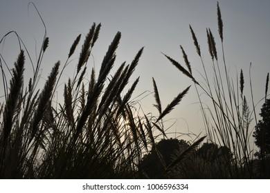 Long grass and sun