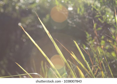 Long grass of various lengths with a lens flare
