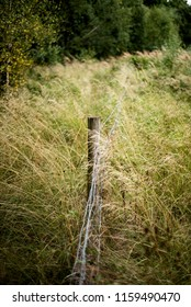 Long Grass, Woodland, UK. Lomography.