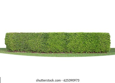 long green hedge, green bush, green fence isolated on white background