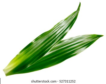 long green leaves isolated on the white background