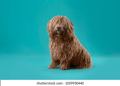 long hair deadlock dog