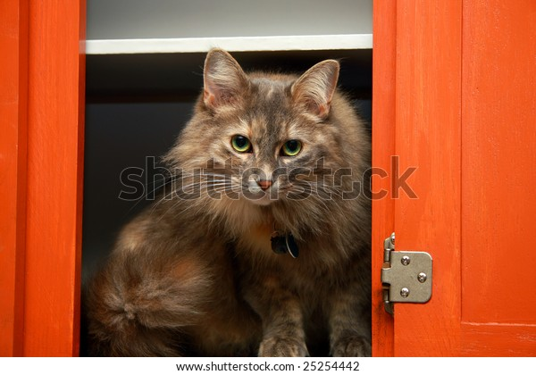 A long haired cat in a red kitchen cabinet.