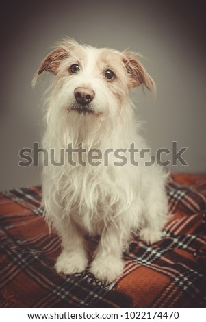 long haired terrier
