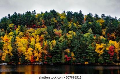 Long Lake Haliburton Forest Trees Fall