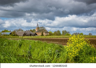 Long line of fruit trees in full blossom in  Dutch Betuwe area with a nice church in the background