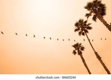 A long line of pelicans flying across an orange sky at sunset, with palm trees in the foreground