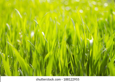 Long Lush Grass Background