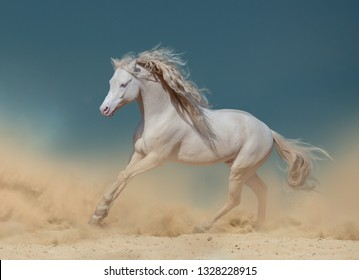 Long mained cremello colour pony in dust running