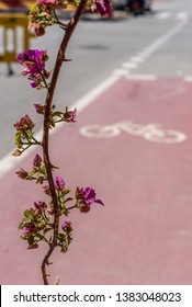 A long nasty sharp branch of a purple bougainvillea plant dangles into the red cycle path creating a hazard for cyclists. The thorny branch from a poorly maintained hedge obstructs the route.