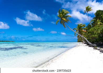 Long palm tree on a tropical white beach on a deserted island in the South Pacific