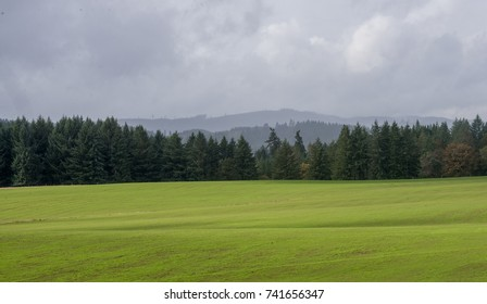 A long panorama of fall grassland in front of a line of fir trees with Oregon's coast range in the background.