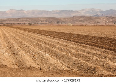 Long parallel rows in dry cotton field during winter in semi-desert region/Winter Furrowed Lines in Cotton Field in Semi-Desert/Long dry rows of wintertime cotton field