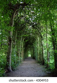 A long pathway with arching green trees