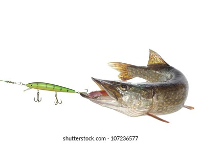long pike and artificial bait on white background