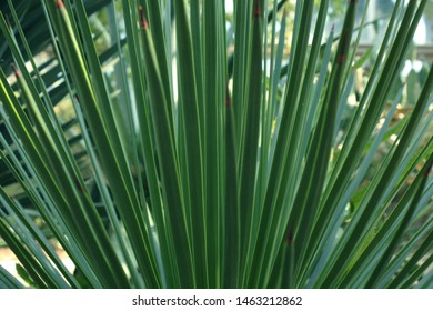 Long Pointed Leaves Images Stock Photos Vectors Shutterstock