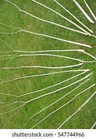 Long pointed  willow branches for constructing a sweat lodge laid out on the green grass