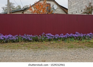 long red metal fence in blue flowers and green grass on the street