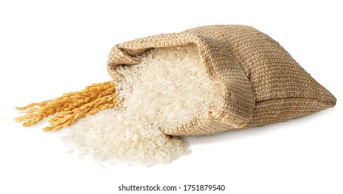 long rice in burlap sack with ears isolated on white background