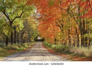 Long Road Home -- A dirt road during the fall color season at Sleeping Bear Dunes National Lakeshore.