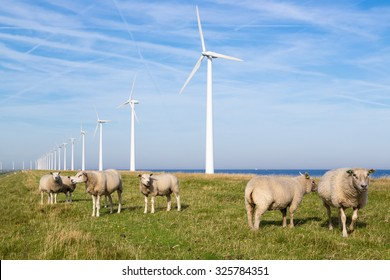 Long row Dutch wind turbines with herd of sheep in front of it