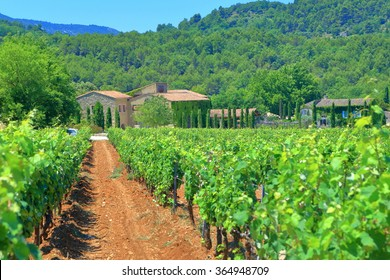 Long rows of grapes in a vineyard near Menerbes, Provence-Alpes-Cote d'Azur, France