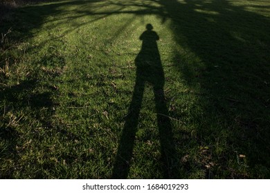 Long shadow in patch of bright green grass under tree