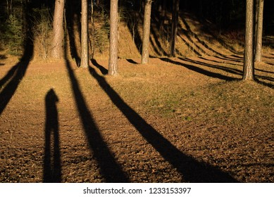 Long Shadows in Northern Europe. Even though it is almost midday, the sun is barely shining at winter time.