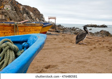 Long shot of a pelican at the beach close to some boats in the National Park Pan de Azúcar close to Chañaral in Chile, South America