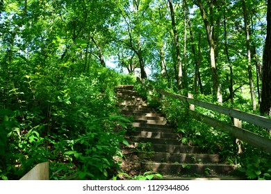 A long steep stairway in the forest of Wisconsin.