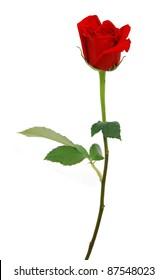 A long stem rose