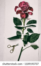 A long stemmed red rose has been cut into pieces and then laid out on linen fabric with a pair of scissors next to it