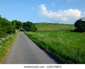 long straight empty country road with spring flowers and trees growing along the edges with sheep grazing in walled fields with a hill in the background on a  spring day with blue sky in yorkshire