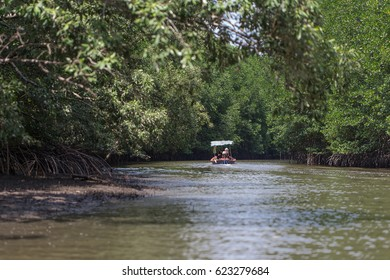 long tail boat moving along green mangrove forest,thailand