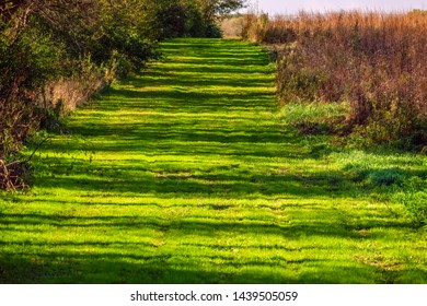 Long transverse tree shadows pattern a grassy multi-use trail in a prairie restoration area once farmland, northern Illinois in October, for themes of autumn, recreation, transience