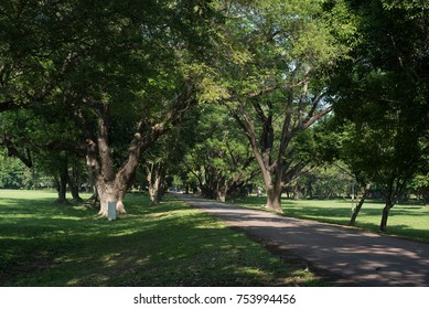 A long tree lined avenue