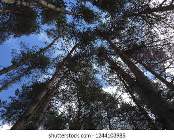 Long trees covered the sky on September at Abant Lake, Turkey...