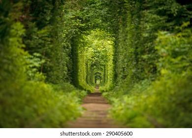 long tunnel of love in ukraine