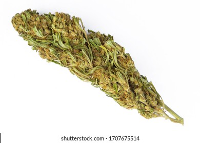 long twig with fresh buds, marijuana