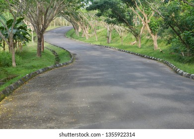the long uphill road